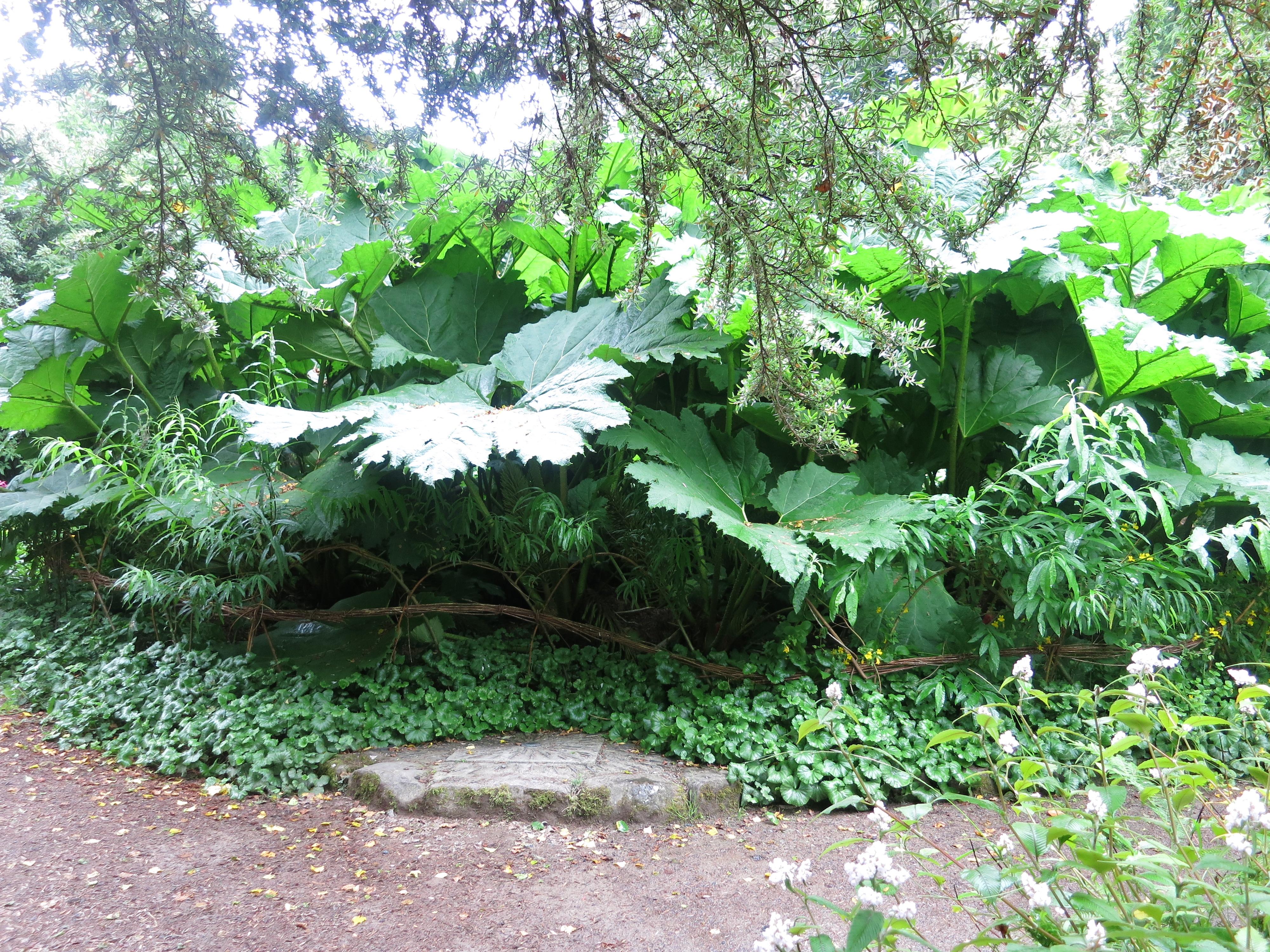 Gartentipps gartenplausch for Garten tipps